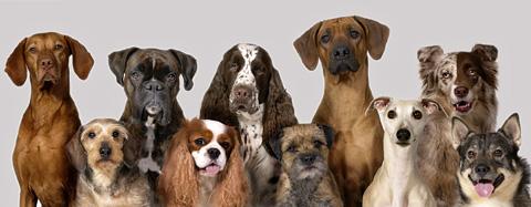 Välj rätt hundras för din och hundens skull