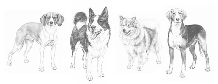Nordic Dog Breeds Nordic Kennel Union