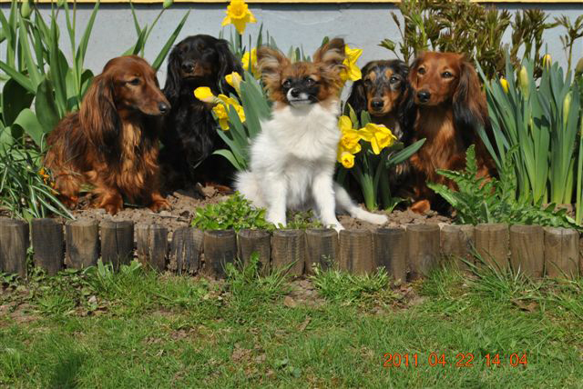 Alla hundarna samlade för fotografering. Foto: Torbjörn Johansson
